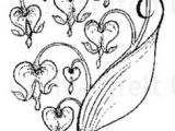 Black Line Drawing Of A Heart Clipart Of A Retro Vintage Black and White Border Of Bleeding Heart