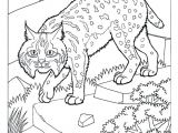 Bobcat Drawing Bobcat Coloring Pages Beautiful Camel Coloring Page Luxury Bobcat