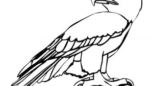 Cartoon Drawing Eagle Eagle Cartoon Drawing In 4 Steps with Photoshop D D N N N soft Cute