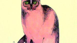 Cool Drawings Of A Cat Pink Cat Illustration Cats Cat Art Cats Illustration