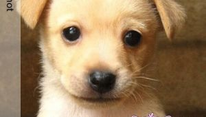 Cute Dogs Drawing Easy Cute Puppies Easy to Draw Wallpaper Dog sophisticated Features Dog