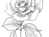 Cute Drawing Of A Rose are You Looking for A Tutorial On How to Draw A Rose Look No