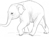 Cute Drawing Of Elephant Cute Baby Elephant Coloring Page From Elephants Category Select
