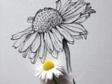 Daisy Drawing Tumblr 50 Best Daisy Images Bellis Perennis Daisy Background Images