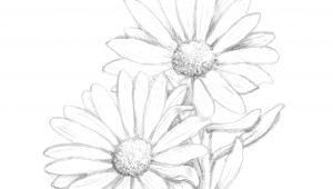 Daisy Drawing Tumblr Resultado De Imagem Para Daisy Flower Drawing Tattoos Pinterest