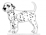 Dalmatian Dog Drawing Learn How to Draw A Dalmatian Dog Dogs Step by Step Drawing