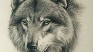 Detailed Drawing Of A Wolf 180 Best Wolf Drawings Images Drawing Techniques Drawing