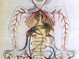 Digestive System Drawing Easy 11th Century Persian Map Of the Digestive System Medical