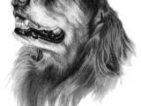 Dog Drawing to Copy 49 Best Sporting Breed Dogs I Ve Sketched Images Dog Art Pet