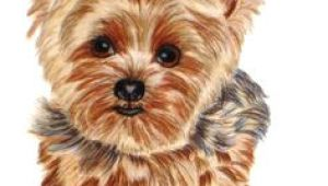 Dog Drawing Yorkie 161 Best Cartoon Yorkies Images Dog Paintings Drawings Of Dogs