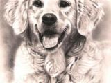 Dogs Barking Drawing 37 Best Dog Sketches Images Pencil Drawings Graphite Drawings
