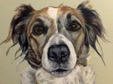 Dogs Barking Drawing Izzie Acrylic On Canvas Bespoke Dog Portrait From Barking Madden