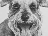 Dogs Barking Drawing Schnauzer Dog Print Drawing Bearded Wonders Schnauzers