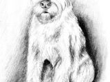 Dogs Drawing Painting Pin by David Little On Terriers Pinterest Zeichnungen Tiere and