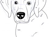 Dogs Drawing Png Labrador is A Dog which Belongs to Gun Type Dog This Dog is Called