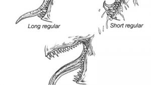Dragon S Teeth Drawing How to Draw A Dragon Various Teeth Drawing Art Drawings Art