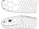 Dragon Scale Drawing 360 Best How to Draw Dragons Images In 2019 Ideas for Drawing