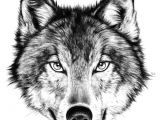 Draw A Easy Wolf Face Drawing How to Draw A Angry Wolf Face with How to Draw A Wolf Face