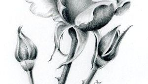 Draw A Full Rose Easy Way to Draw A Rose 2860 Best Pencil Sketch Images On Pinterest