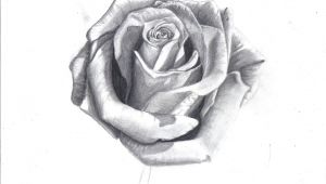 Draw A Rose In Pencil How to Draw A Rose In Pencil Draw A Realistic Rose Step by Step