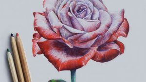 Draw A Rose with Chalk Drawing Rose Cool Art Pinterest Drawings Pencil Drawings and