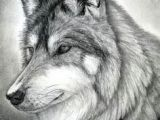 Draw Realistic Wolf Face 109 Best Wolf Images Wolf Drawings Art Drawings Draw Animals