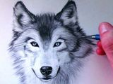 Draw Realistic Wolf Face How to Draw A Wolf Youtube