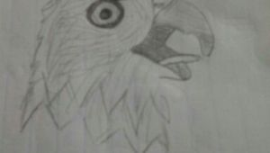 Drawing 4 Year Old 10 Year Old Girl Drawing Of A Bald Eagle Sketches Pinterest 10