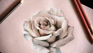 Drawing A 3d Rose 25 Beautiful Rose Drawings and Paintings for Your Inspiration