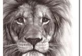 Drawing A Big Cat Head Best Pencil Drawing Of A Lion Google Search Art In 2018