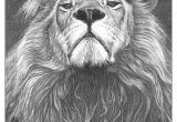 Drawing A Big Cat Head Google Drawings Tattoos Lion Tattoo Drawings