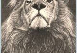 Drawing A Big Cat Head Realistic Drawings Of Animals 42 Incredibly Realistic and Adorable