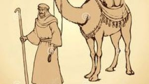 Drawing A Cartoon Camel 18 Best Camel Images Camel Camels Drawings