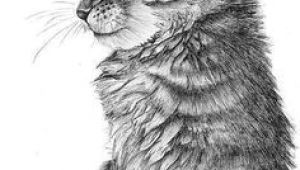 Drawing A Cat Body 41 Best Cute Cat Drawing Images Crazy Cat Lady Kittens Animaux