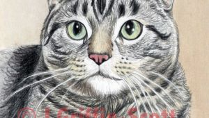 Drawing A Cat Mouth How to Draw A Cat In Colored Pencil