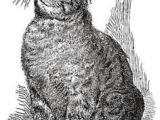 Drawing A Cat Profile 300 Best Drawing Cats Images In 2019 Draw Animals Cat