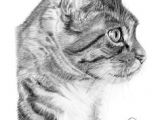 Drawing A Cat Profile 53 Best Drawing Cats Images Pencil Drawings Animal Drawings