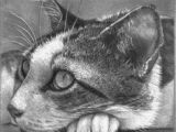 Drawing A Cat Profile 85 Best Realistic Cat Art Images In 2019 Cat Art Draw Animals