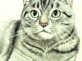 Drawing A Cat Quickly How to Draw A Cat In Colored Pencil