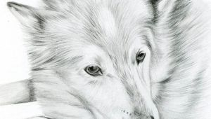 Drawing A Dog In Pencil Custom Pencil Cat Sketch Size 4 X 4 or 5 X 5 Pet Portrait Cat
