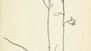 Drawing A Field Of Flowers Field Book Of Western Wild Flowers Botanical Illustration Wild