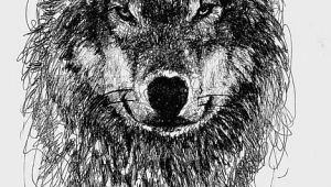 Drawing A Gray Wolf Wolf Scribble Drawing Scribble Art Scribble Art Scribble Drawings