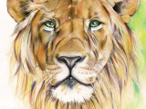 Drawing A Lions Eye Colored Pencils Drawing A4 Lion Art In 2018 Pinterest Pencil