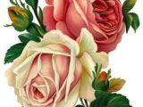 Drawing A Pink Rose 351 Best Flo Drawing Images Botanical Art Botanical Flowers Draw