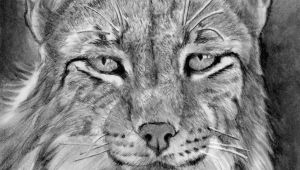 Drawing A Realistic Dog Step by Step How to Draw A Realistic Lynx Step 22 Cats Pinterest Drawings