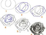 Drawing A Realistic Rose Step by Step 100 Best How to Draw Tutorials Flowers Images Drawing Techniques
