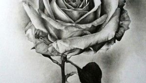 Drawing A Rose Realistic Pin by Crystals Hutt On Flower Plants Drawings In 2019 Drawings