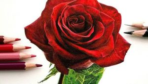 Drawing A Rose with Colored Pencils so Realistic Rose Drawing Misc Drawings Art Pencil Drawings