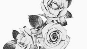 Drawing A White Rose 41 Best Black and White Roses Images
