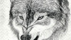 Drawing A Wolf Face Step by Step How to Draw A Growling Wolf Step 15 Art Drawings Wolf Drawing